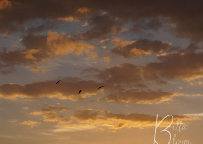 sunrise-birds-beach-bellabloom