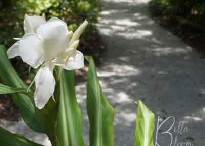 whiteflower-pathway-bellabloom